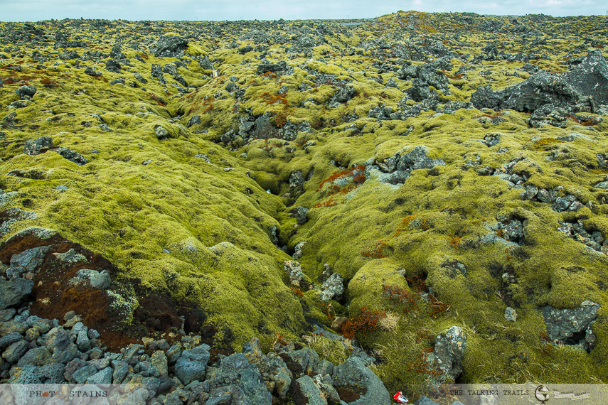 Mossy lava Fields in Iceland