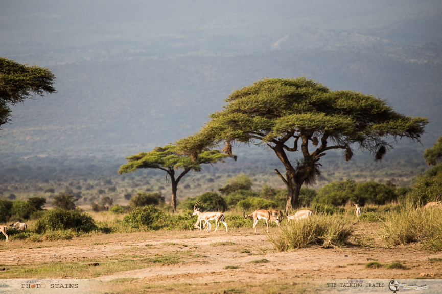 Amboseli National Park by TheTalkingTrails