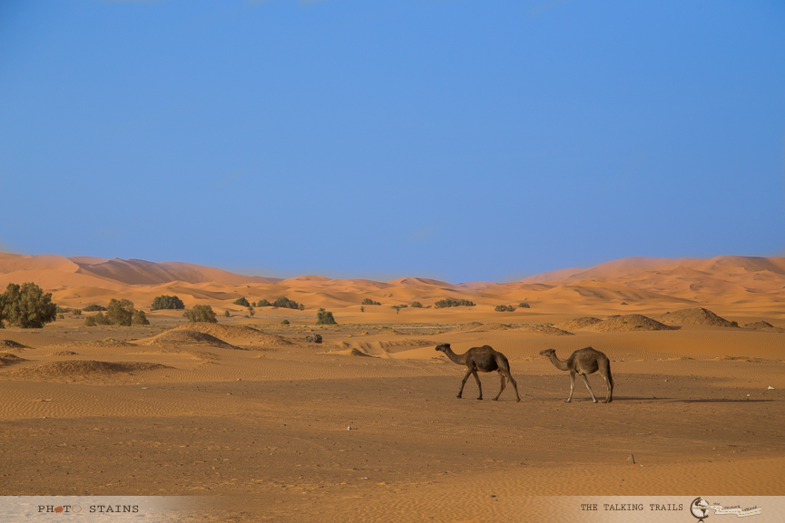 Sahara Desert by TheTalkingTrails