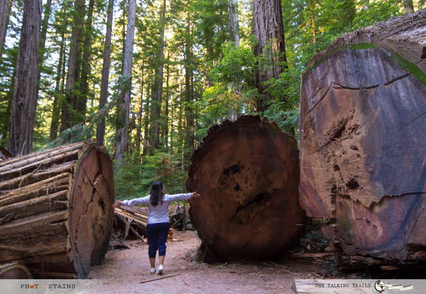 Redwood by TheTalkingTrails