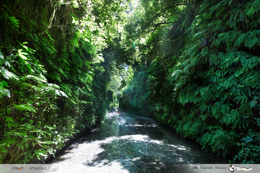 Fern Canyon by TheTalkingTrails